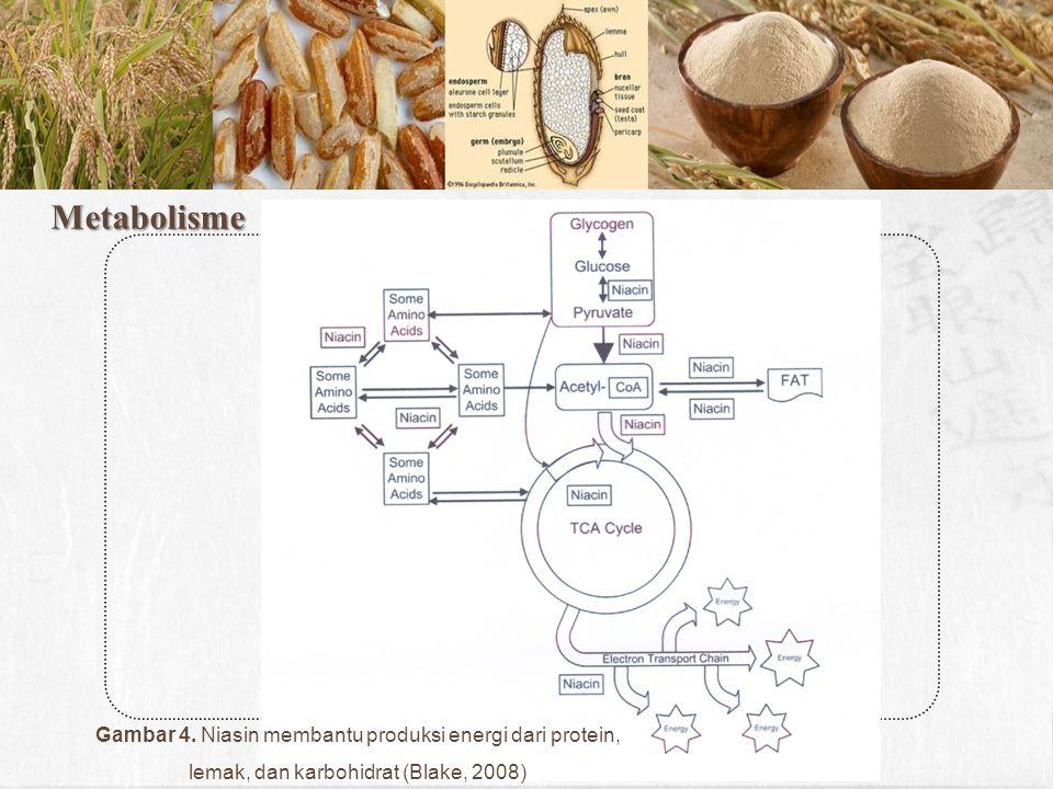 Metabolisme Gambar 4. Niasin membantu produksi energi dari protein, lemak, dan karbohidrat (Blake, 2008)