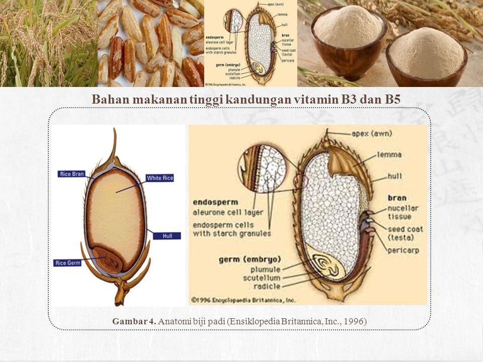 Bahan makanan tinggi kandungan vitamin B3 dan B5 Gambar 4. Anatomi biji padi (Ensiklopedia Britannica, Inc., 1996)