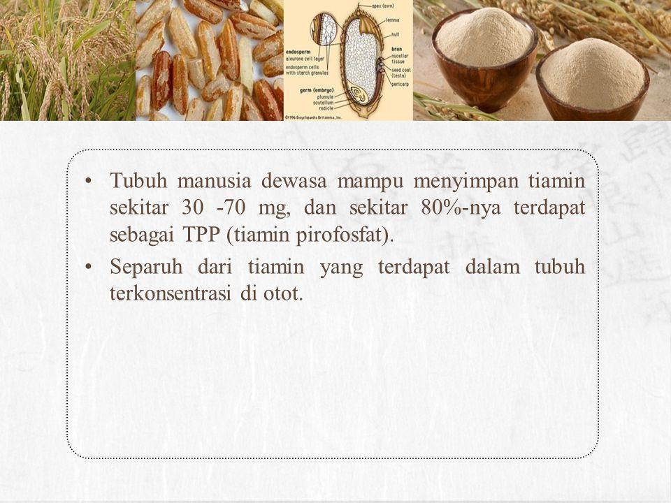 Tubuh manusia dewasa mampu menyimpan tiamin sekitar 30 -70 mg, dan sekitar 80%-nya terdapat sebagai TPP (tiamin pirofosfat). Separuh dari tiamin yang