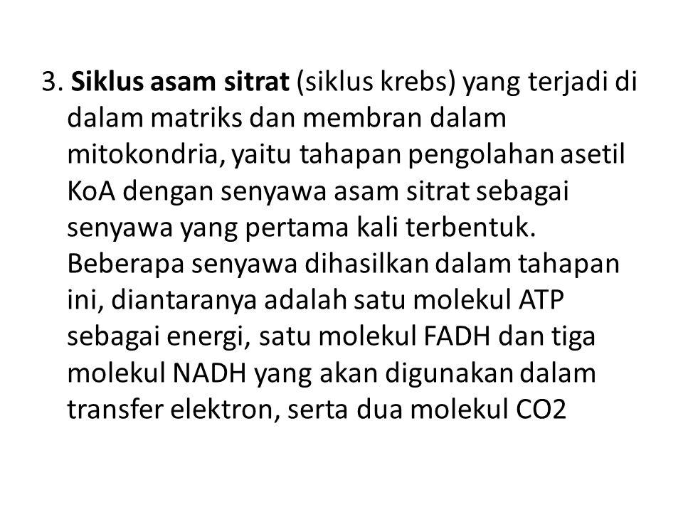 2. Dekarboksilasi oksidatif: pengubahan asam piruvat (beratom C3) menjadi Asetil KoA (beratom C2) dengan melepaskan CO2, peristiwa ini berlangsung di