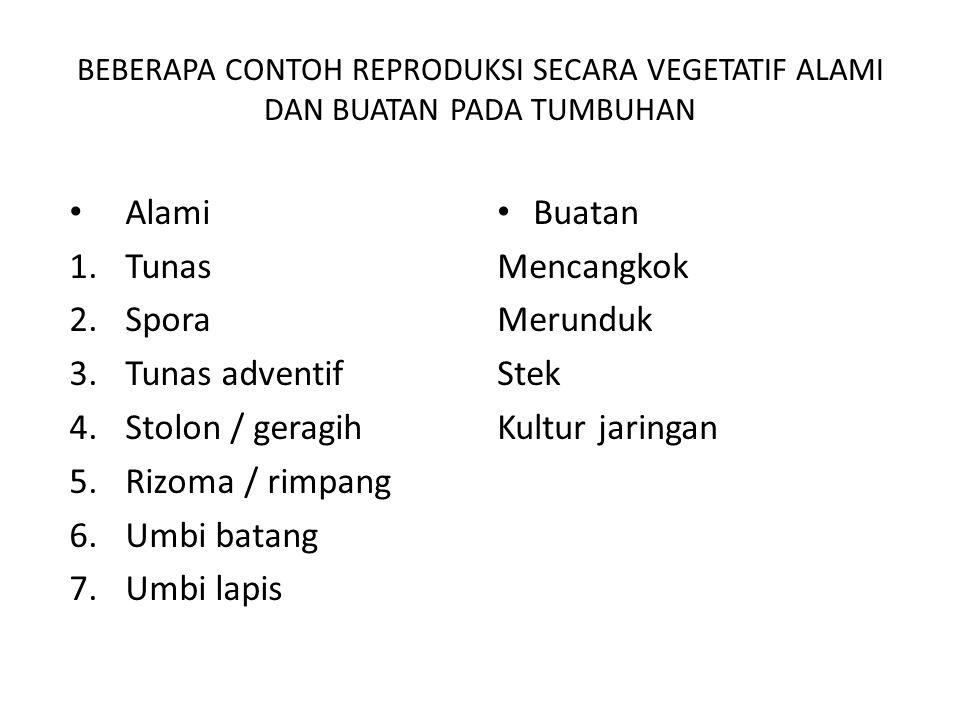 SISTEM REPRODUKSI TUMBUHAN DAN HEWAN Vegetatif (asexual) Lebih sering terjadi pada Tumbuhan.
