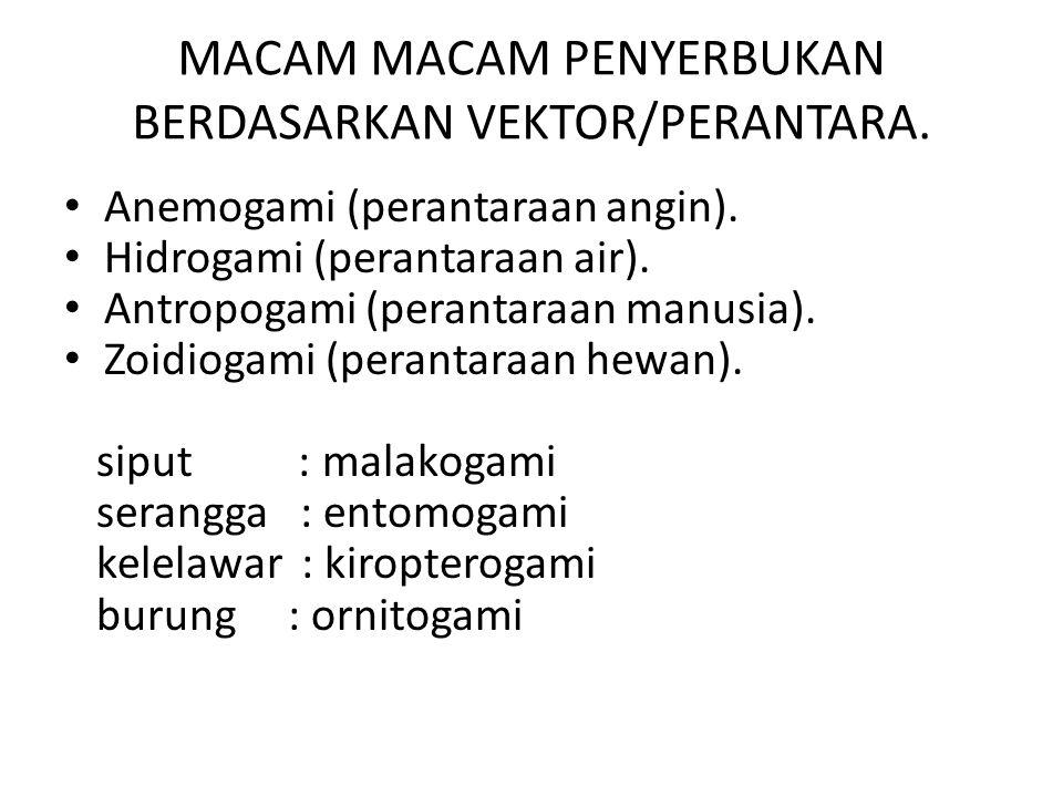 MACAM MACAM PENYERBUKAN BERDASARKAN ASAL SERBUK SARI Penyerbukan sendiri (autogami) Penyerbukan tetangga(geitonogami) Penyerbukan silang(allogami / xenogami) Penyerbukan bastar (hybridogami)