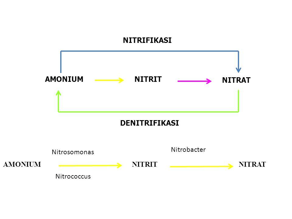 KEMOSINTESIS 1.BAKTERI SULFUR CO2 + 2 H2S CH2O + 2 S +H2O 2.
