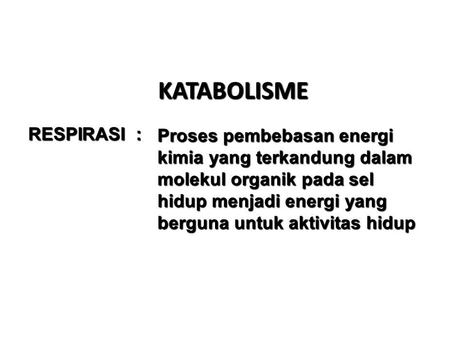 RESUME ANABOLISME FOTOSINTESIS 1.