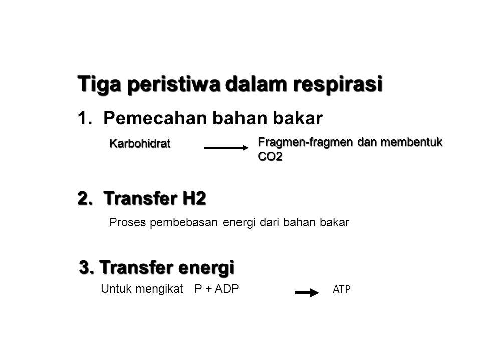 KATABOLISME RESPIRASI : Proses pembebasan energi kimia yang terkandung dalam molekul organik pada sel hidup menjadi energi yang berguna untuk aktivitas hidup