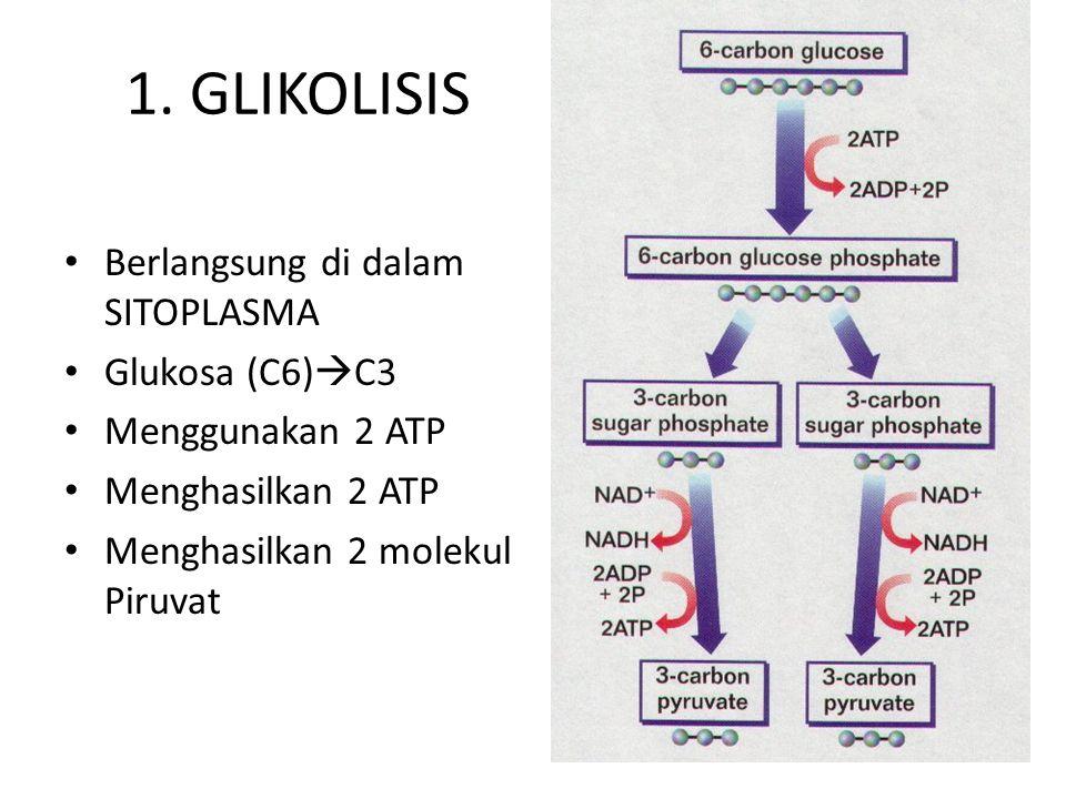 TAHAP-TAHAP RESPIRASI SEL 1.Glikolisis Glukosa + 2 ADP + 2 P + 2 NAD 2 Piruvat + 2 NADH2 + 2 ATP 2.