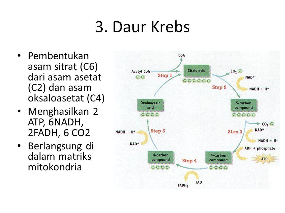 2. Dekarboksilasi oksidatif Dihasilkan 2 molekul CO2 dan 2 molekul NADH Dihasilkan 2 Asetil CoA (C2)