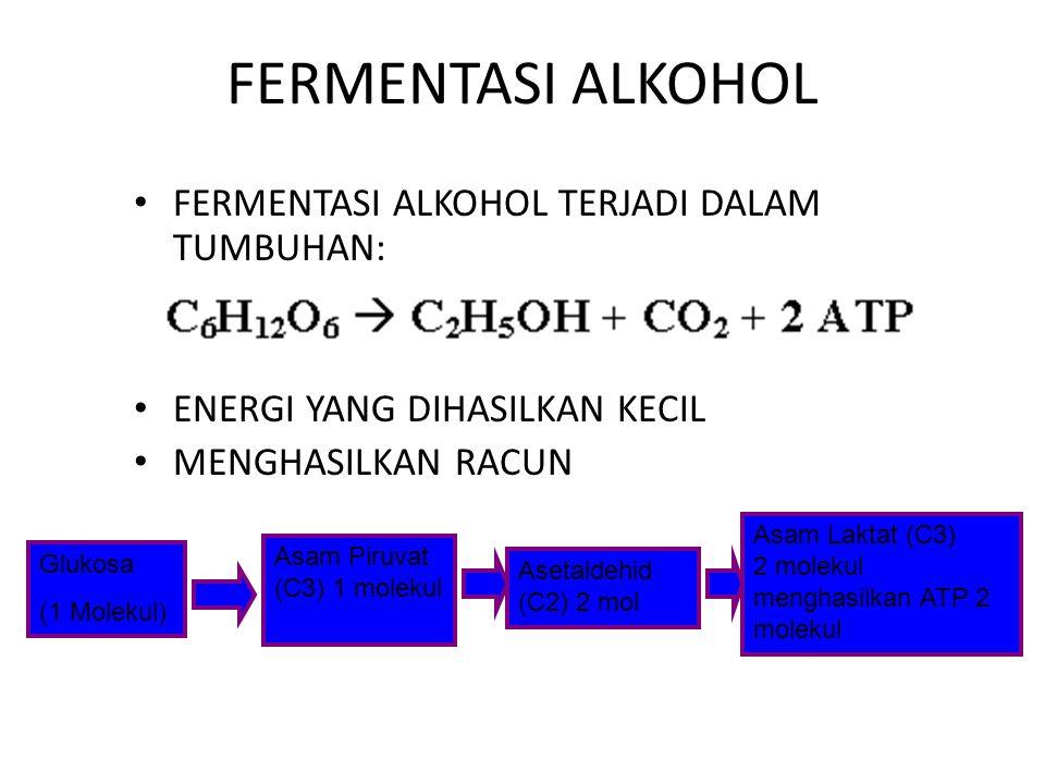 FERMENTASI ASAM LAKTAT TERJADI DALAM JARINGAN HEWAN HASIL AKHIR BERUPA SENYAWA ASAM LAKTAT JUMLAH ENERGI SEDIKIT Glukosa (1 Molekul) Asam Piruvat (C) 1 molekul Asam Laktat (C3) 2 molekul menghasilkan ATP 2 molekul