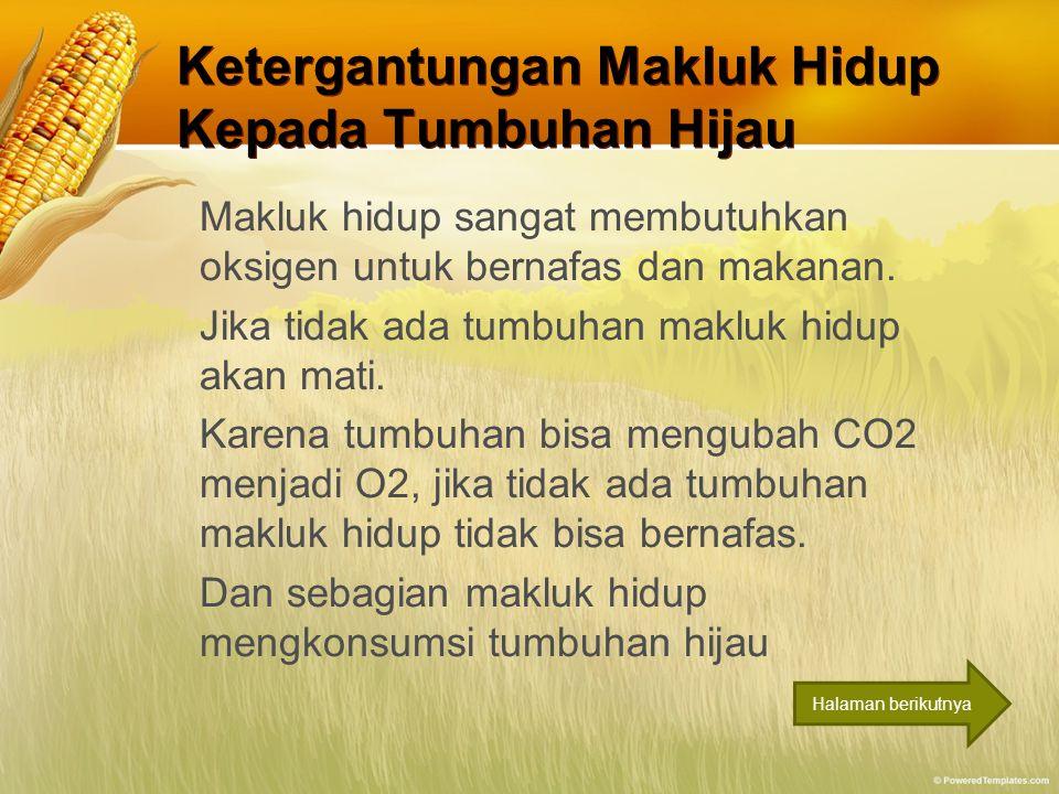 Ketergantungan Makluk Hidup Kepada Tumbuhan Hijau Makluk hidup sangat membutuhkan oksigen untuk bernafas dan makanan. Jika tidak ada tumbuhan makluk h