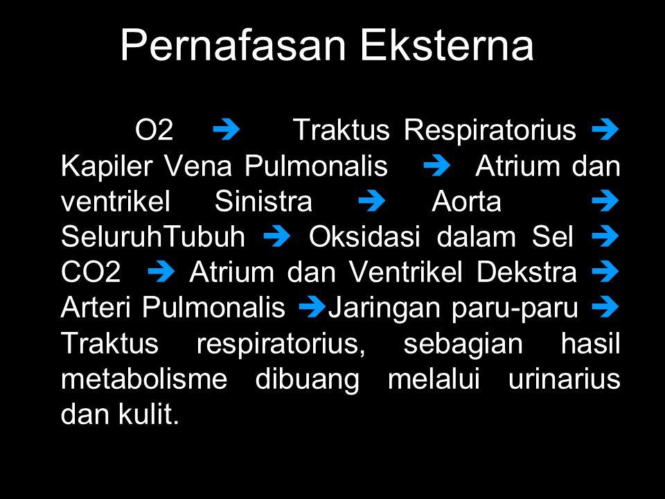 O2  Traktus Respiratorius  Kapiler Vena Pulmonalis  Atrium dan ventrikel Sinistra  Aorta  SeluruhTubuh  Oksidasi dalam Sel  CO2  Atrium dan Ventrikel Dekstra  Arteri Pulmonalis  Jaringan paru-paru  Traktus respiratorius, sebagian hasil metabolisme dibuang melalui urinarius dan kulit.
