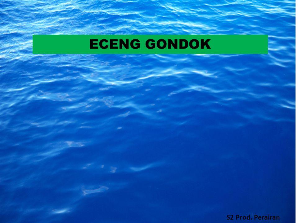 ECENG GONDOK S2 Prod. Perairan