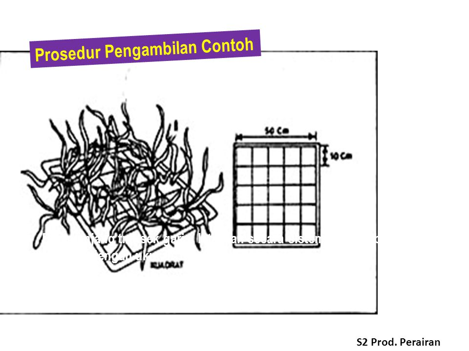  Di sepanjang transek garis, letakkan secara sistematik plot berbentuk bujur sangkar dengan ukuran 100 cm x 100 cm.