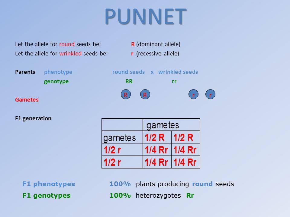 Parents phenotype round seeds x round seeds genotype Rr Rr Gametes F2 generation RrrR Phenotype3/4 (75%) plants producing round seeds 1/4 (25%) plants producing wrinkled seeds Genotype1/4 RR 1/2 Rr 1/4 rr (25%) (50%) (25%) Ratio3:1 Round seeds: wrinkled seeds