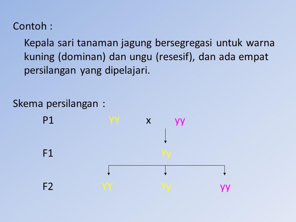 Contoh : Kepala sari tanaman jagung bersegregasi untuk warna kuning (dominan) dan ungu (resesif), dan ada empat persilangan yang dipelajari. Skema per