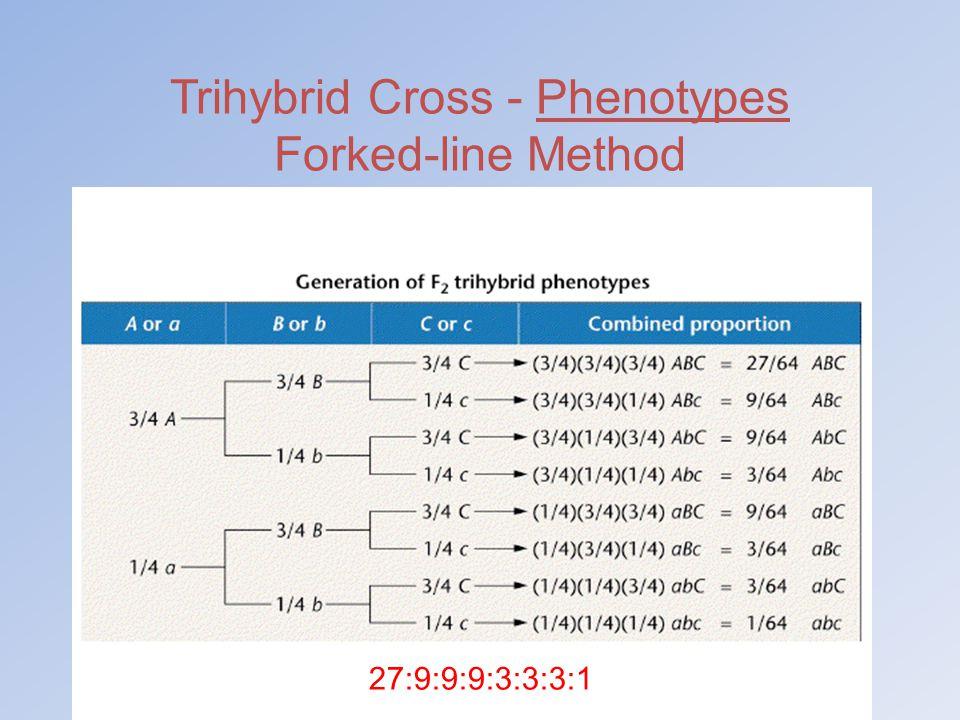 Trihybrid Cross - Phenotypes Forked-line Method 27:9:9:9:3:3:3:1