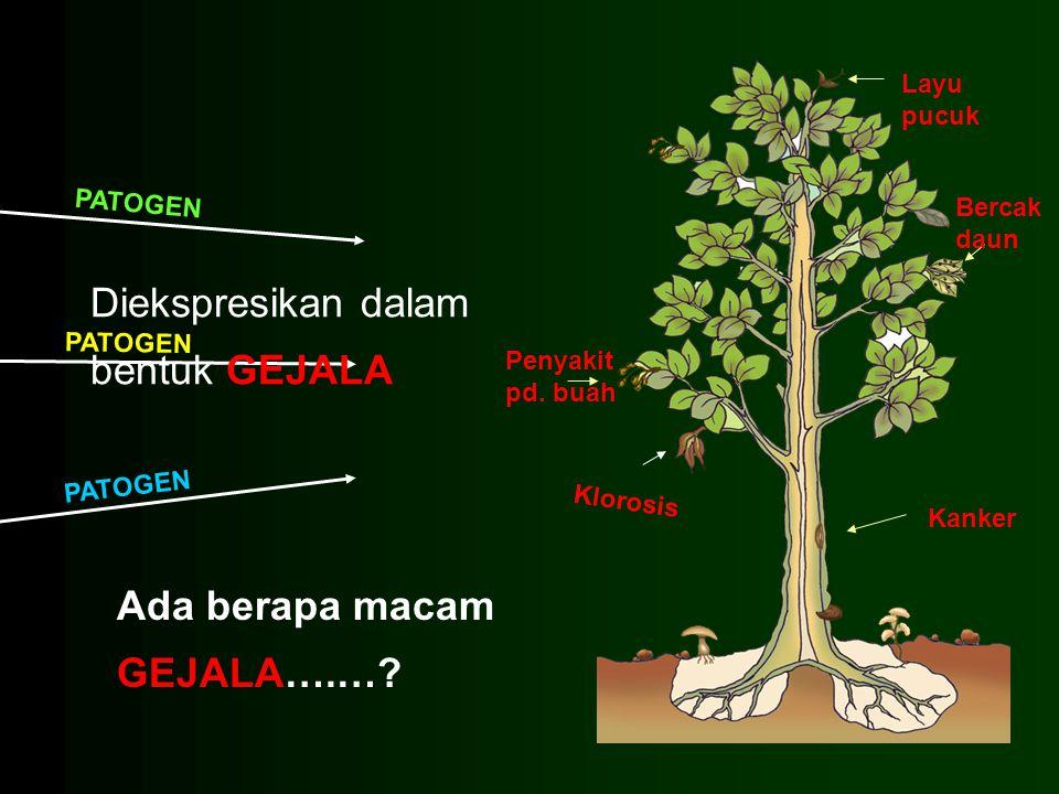 PATOGEN Penyakit pd. buah Layu pucuk Klorosis Kanker Bercak daun Diekspresikan dalam bentuk GEJALA Ada berapa macam GEJALA….…?