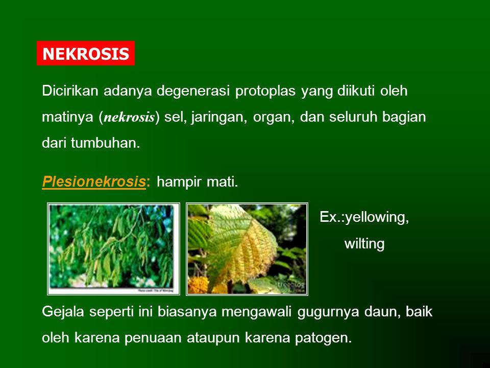 NEKROSIS Dicirikan adanya degenerasi protoplas yang diikuti oleh matinya ( nekrosis ) sel, jaringan, organ, dan seluruh bagian dari tumbuhan. Plesione