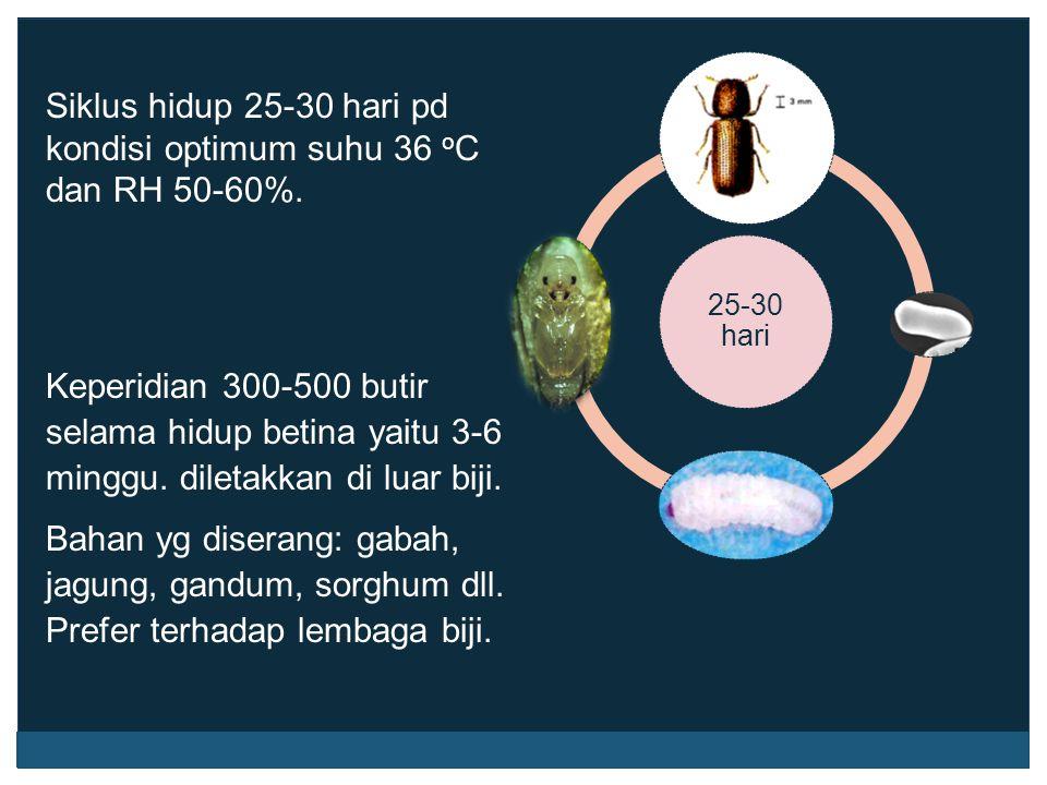 Siklus hidup 25-30 hari pd kondisi optimum suhu 36 o C dan RH 50-60%. Keperidian 300-500 butir selama hidup betina yaitu 3-6 minggu. diletakkan di lua