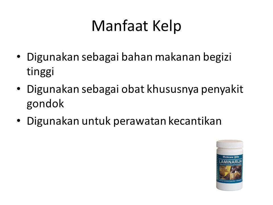 Manfaat Kelp Digunakan sebagai bahan makanan begizi tinggi Digunakan sebagai obat khususnya penyakit gondok Digunakan untuk perawatan kecantikan