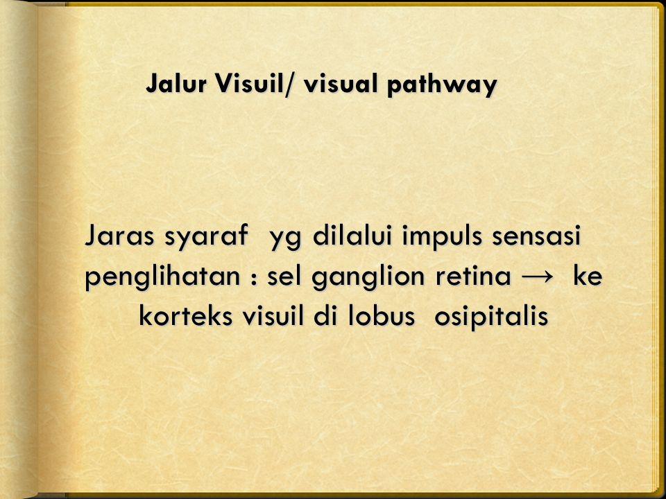 Jalur Visuil/ visual pathway Jaras syaraf yg dilalui impuls sensasi penglihatan : sel ganglion retina → ke korteks visuil di lobus osipitalis