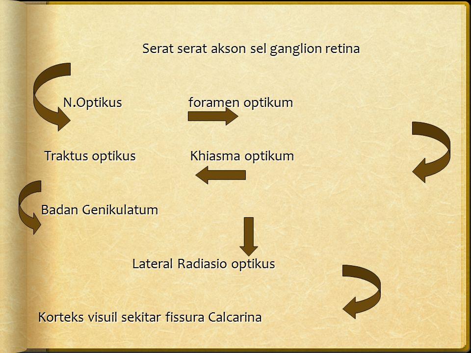 Serat serat akson sel ganglion retina N.Optikus foramen optikum N.Optikus foramen optikum Traktus optikus Khiasma optikum Traktus optikus Khiasma opti
