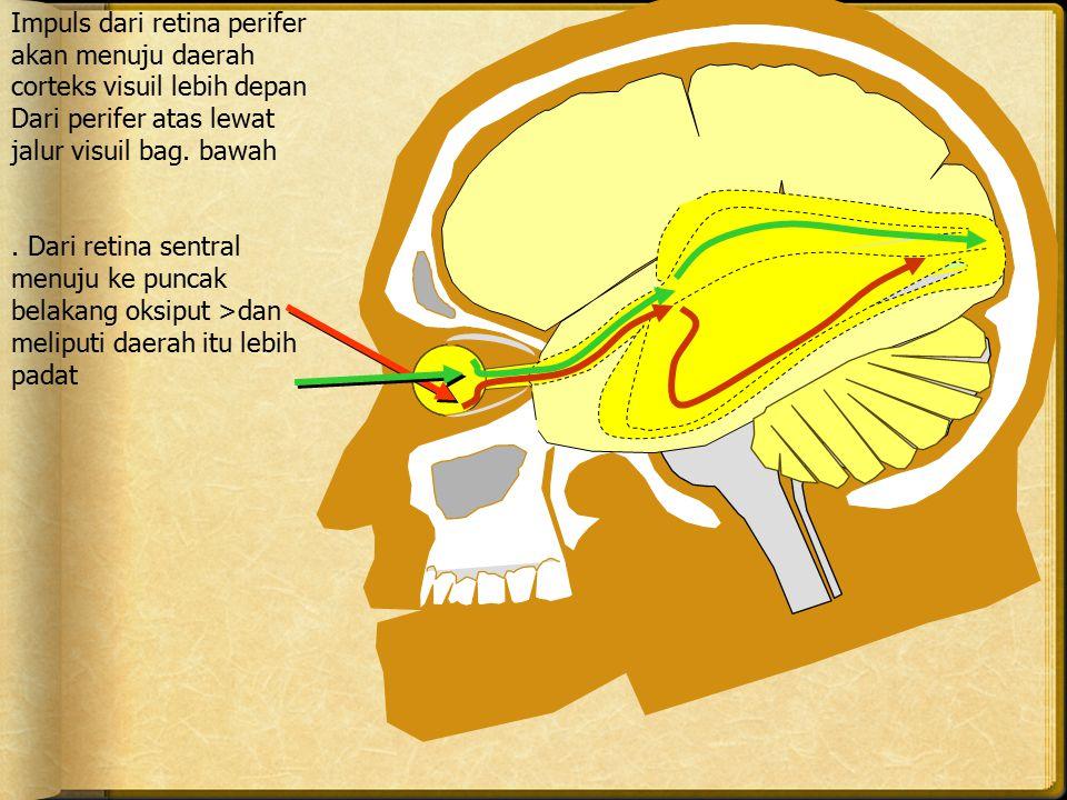 Impuls dari retina perifer akan menuju daerah corteks visuil lebih depan Dari perifer atas lewat jalur visuil bag. bawah. Dari retina sentral menuju k
