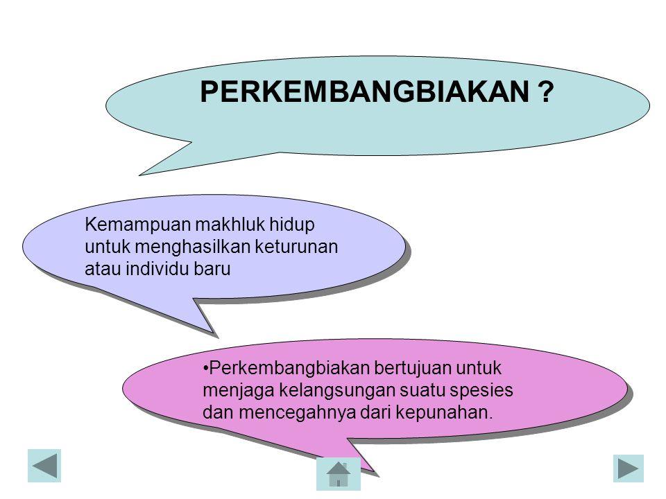 Organ Reproduksi Wanita dan Fungsinya OrganFungsi Ovarium Tuba fallopi (Oviduk) Uterus Menghasikan sel telur (ovum) dan hormon wanita *Mengalirkan ovum dari ovarium ke uterus *Tempat fertilisasi *Tempat berlangsungnya implantasi dari embrio * Tempat pertumbuhan dan perkembangan embrio