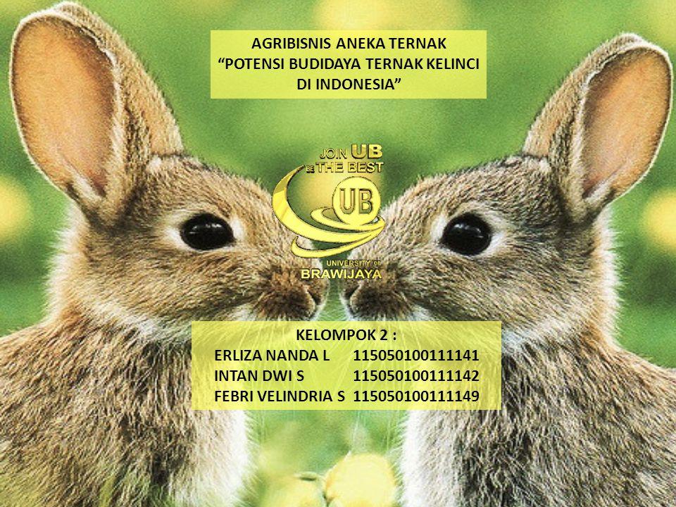 """AGRIBISNIS ANEKA TERNAK """"POTENSI BUDIDAYA TERNAK KELINCI DI INDONESIA"""" KELOMPOK 2 : ERLIZA NANDA L 115050100111141 INTAN DWI S 115050100111142 FEBRI V"""