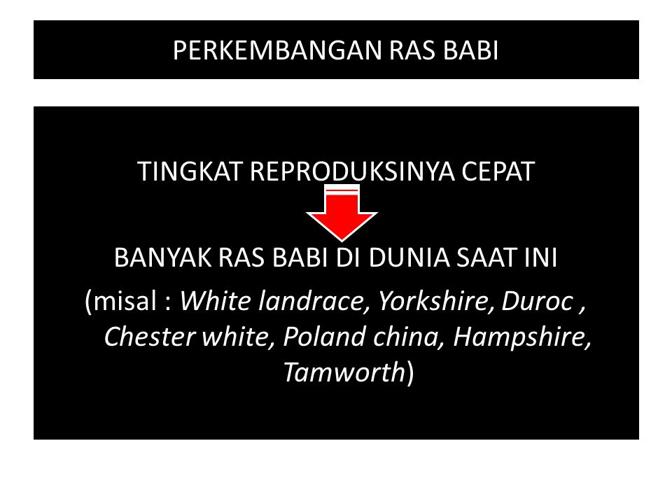 PERKEMBANGAN RAS BABI TINGKAT REPRODUKSINYA CEPAT BANYAK RAS BABI DI DUNIA SAAT INI (misal : White landrace, Yorkshire, Duroc, Chester white, Poland c
