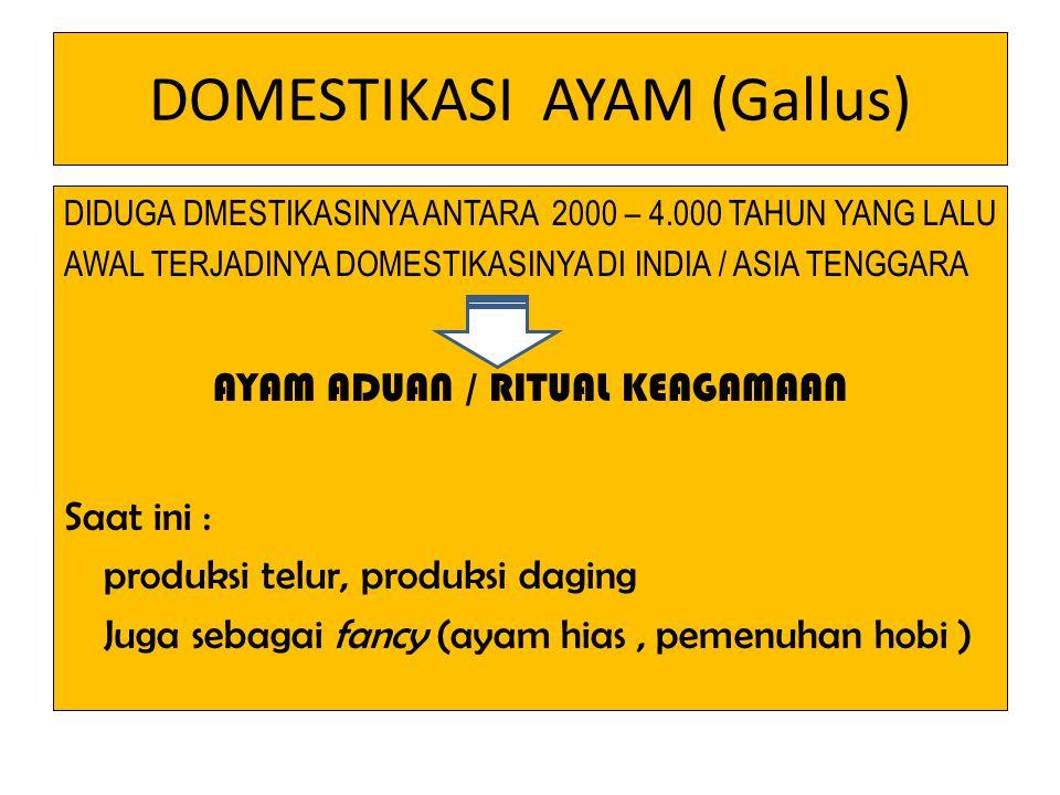 DOMESTIKASI AYAM (Gallus) DIDUGA DMESTIKASINYA ANTARA 2000 – 4.000 TAHUN YANG LALU AWAL TERJADINYA DOMESTIKASINYA DI INDIA / ASIA TENGGARA AYAM ADUAN