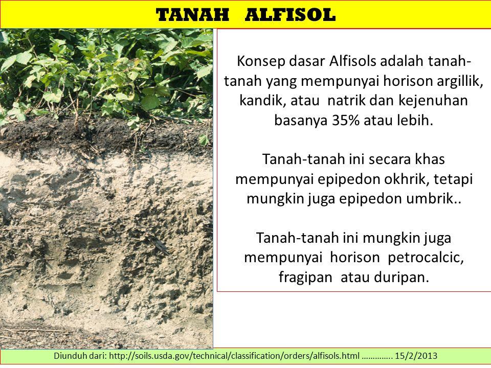 TANAH ALFISOL Konsep dasar Alfisols adalah tanah- tanah yang mempunyai horison argillik, kandik, atau natrik dan kejenuhan basanya 35% atau lebih. Tan