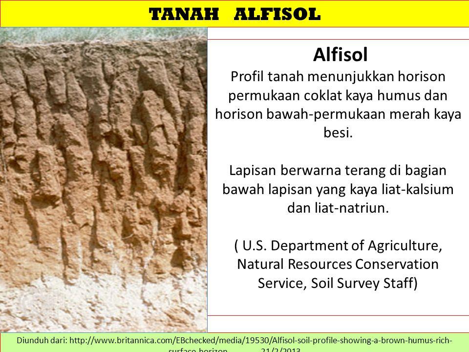 TANAH ALFISOL Alfisol Profil tanah menunjukkan horison permukaan coklat kaya humus dan horison bawah-permukaan merah kaya besi. Lapisan berwarna teran