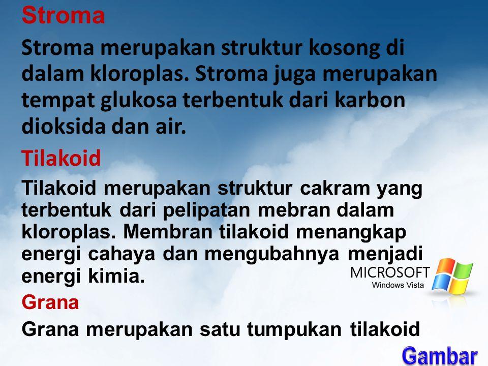 Stroma Stroma merupakan struktur kosong di dalam kloroplas.