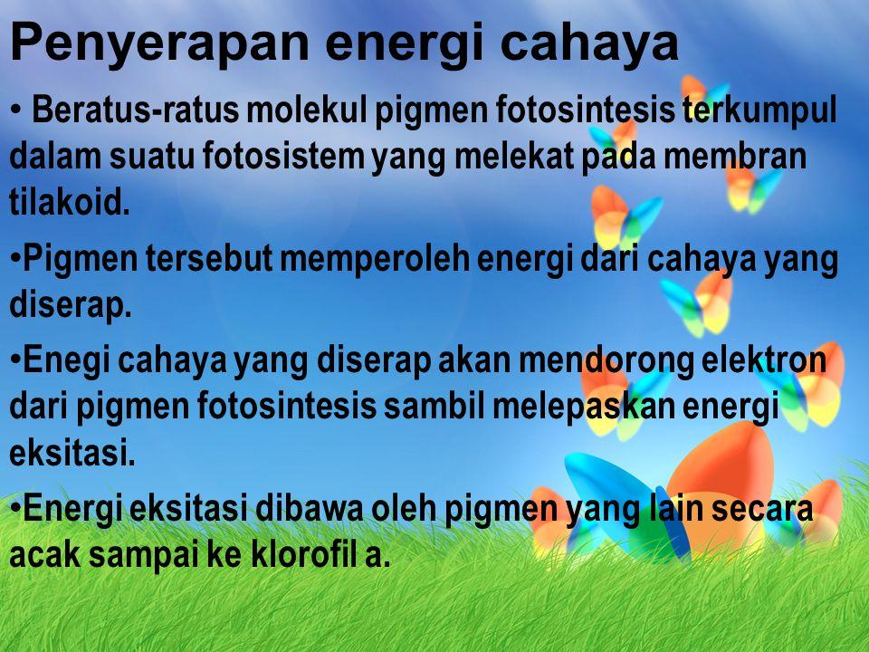 Penyerapan energi cahaya Beratus-ratus molekul pigmen fotosintesis terkumpul dalam suatu fotosistem yang melekat pada membran tilakoid.