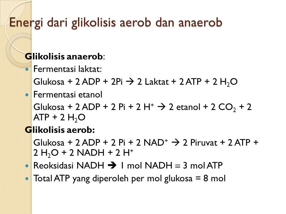 Energi dari glikolisis aerob dan anaerob Glikolisis anaerob: Fermentasi laktat: Glukosa + 2 ADP + 2Pi  2 Laktat + 2 ATP + 2 H 2 O Fermentasi etanol G