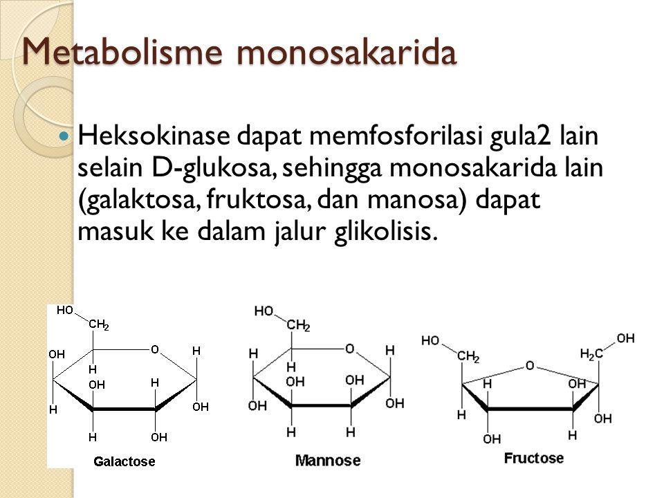 Metabolisme monosakarida Heksokinase dapat memfosforilasi gula2 lain selain D-glukosa, sehingga monosakarida lain (galaktosa, fruktosa, dan manosa) da