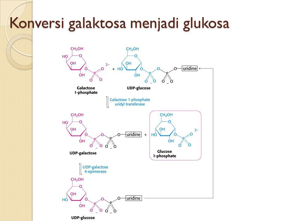 Konversi galaktosa menjadi glukosa