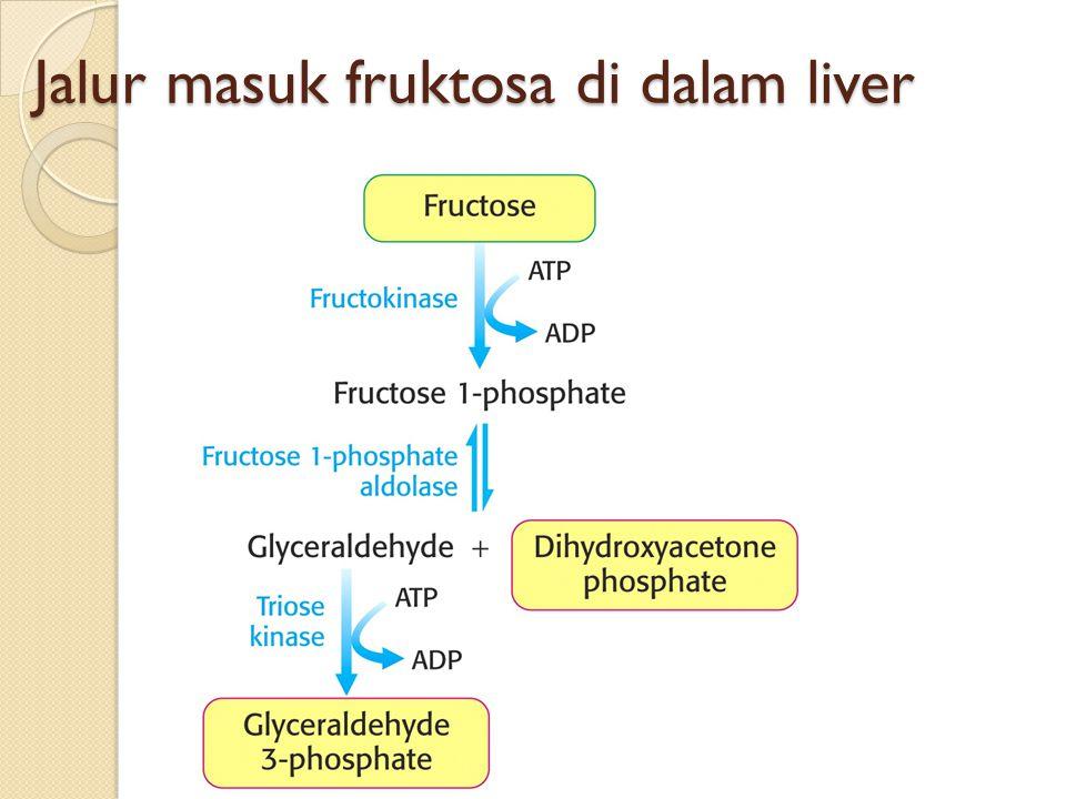 Jalur masuk fruktosa di dalam liver