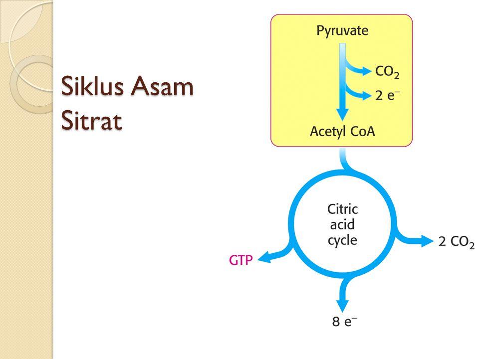 Siklus Asam Sitrat