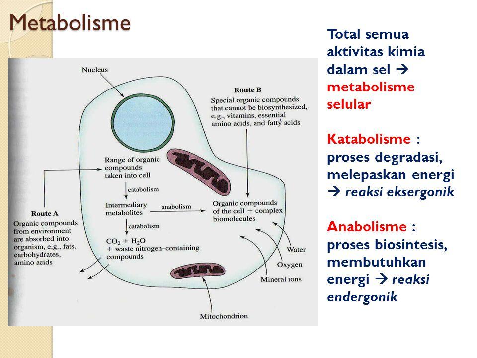 Metabolisme Total semua aktivitas kimia dalam sel  metabolisme selular Katabolisme : proses degradasi, melepaskan energi  reaksi eksergonik Anabolis