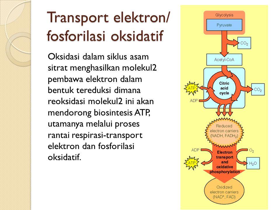 Transport elektron/ fosforilasi oksidatif Oksidasi dalam siklus asam sitrat menghasilkan molekul2 pembawa elektron dalam bentuk tereduksi dimana reoks