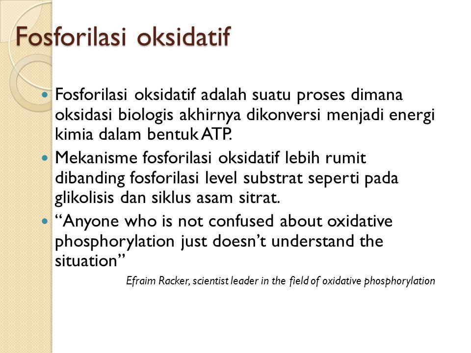 Fosforilasi oksidatif Fosforilasi oksidatif adalah suatu proses dimana oksidasi biologis akhirnya dikonversi menjadi energi kimia dalam bentuk ATP. Me