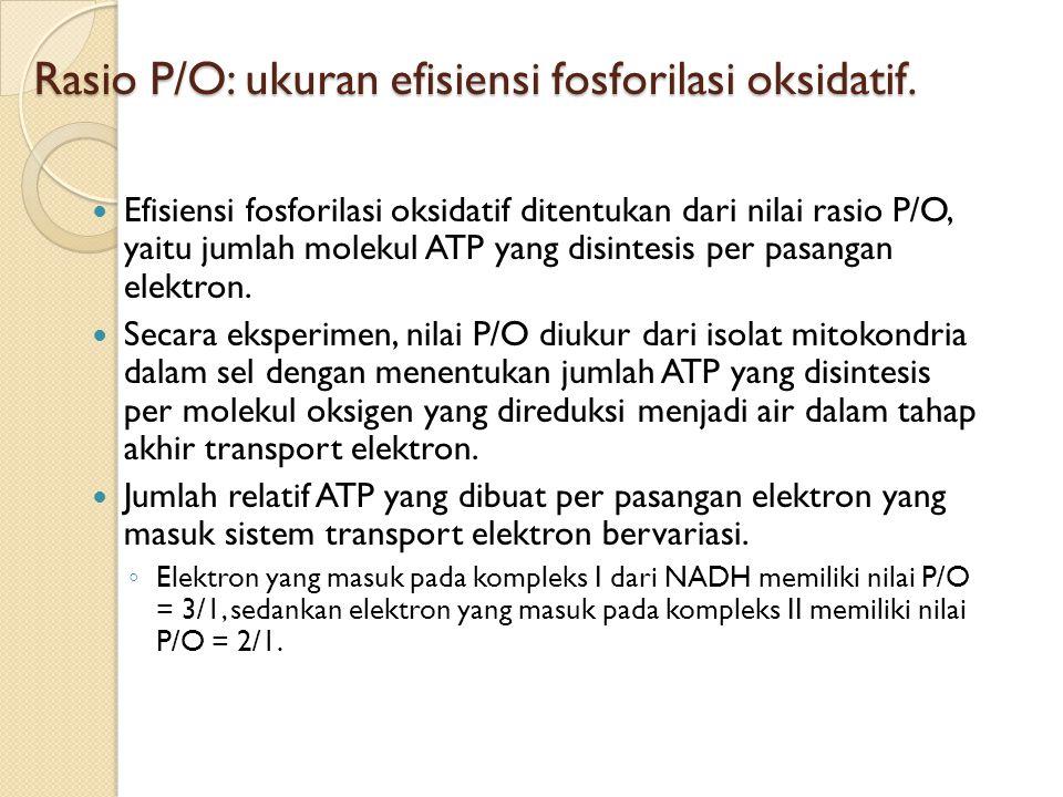 Rasio P/O: ukuran efisiensi fosforilasi oksidatif. Efisiensi fosforilasi oksidatif ditentukan dari nilai rasio P/O, yaitu jumlah molekul ATP yang disi