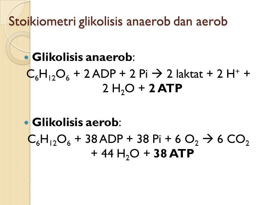 Stoikiometri glikolisis anaerob dan aerob Glikolisis anaerob: C 6 H 12 O 6 + 2 ADP + 2 Pi  2 laktat + 2 H + + 2 H 2 O + 2 ATP Glikolisis aerob: C 6 H