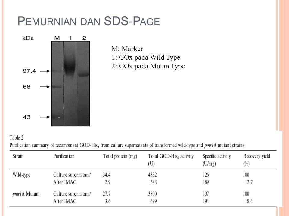P EMURNIAN DAN SDS-P AGE M: Marker 1: GOx pada Wild Type 2: GOx pada Mutan Type