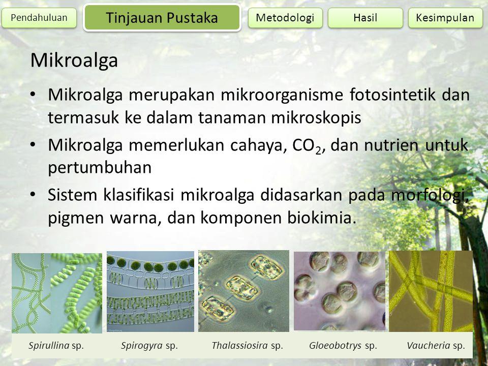 Mikroalga merupakan mikroorganisme fotosintetik dan termasuk ke dalam tanaman mikroskopis Mikroalga memerlukan cahaya, CO 2, dan nutrien untuk pertumb