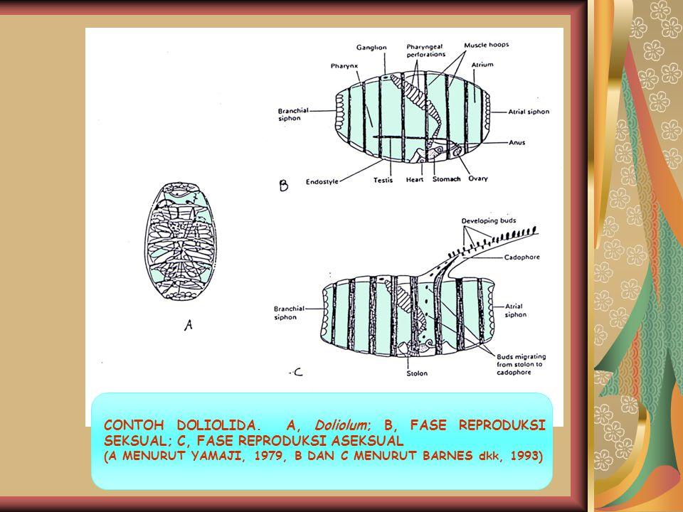 CONTOH DOLIOLIDA. A, Doliolum; B, FASE REPRODUKSI SEKSUAL; C, FASE REPRODUKSI ASEKSUAL (A MENURUT YAMAJI, 1979, B DAN C MENURUT BARNES dkk, 1993)