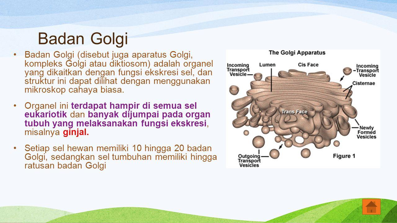 Badan Golgi Badan Golgi (disebut juga aparatus Golgi, kompleks Golgi atau diktiosom) adalah organel yang dikaitkan dengan fungsi ekskresi sel, dan str
