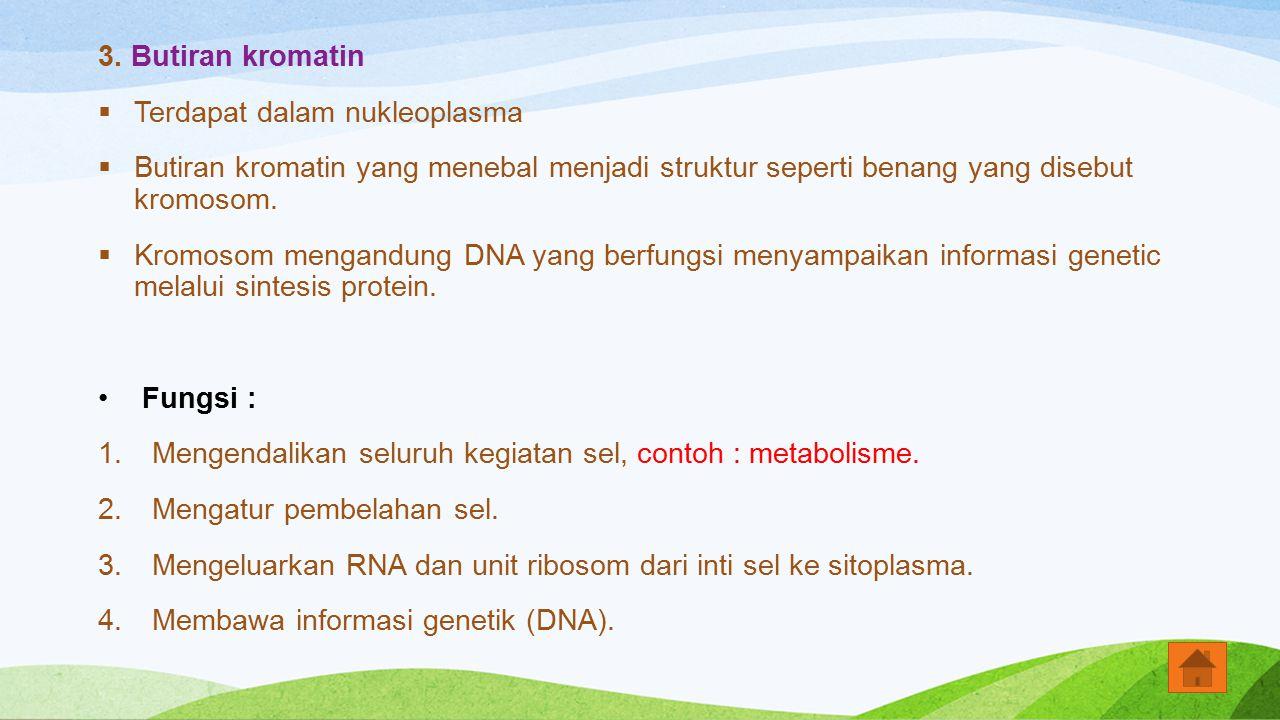 3. Butiran kromatin  Terdapat dalam nukleoplasma  Butiran kromatin yang menebal menjadi struktur seperti benang yang disebut kromosom.  Kromosom me