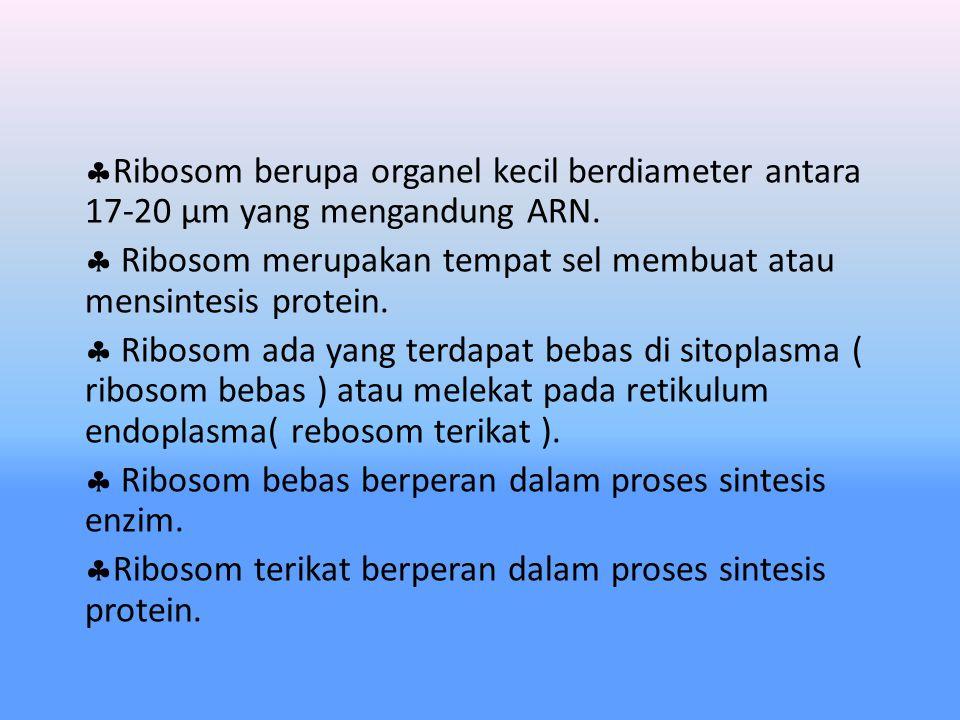 5. Ribosom Ribosom, memiliki 2 sub unit besar dan kecil Sub unit kecil dan besar bersatu